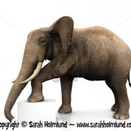 Elephant with sign 2