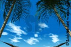 Hammock between palmtrees 3