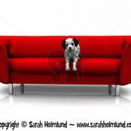 Dalmatian puppy in sofa 1