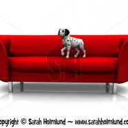 Dalmatian puppy in sofa 2
