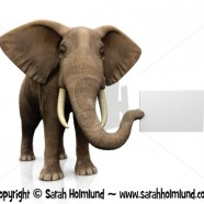 Elephant with sign 1