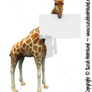 Giraffe with sign