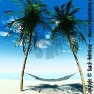 Hammock between palmtrees