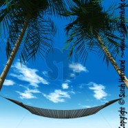 Hammock between palmtrees 3