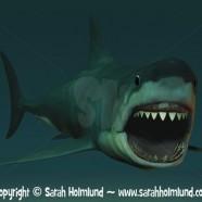 Great white shark ready to bite